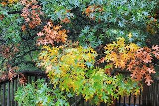 photo of earth tone oak leaves