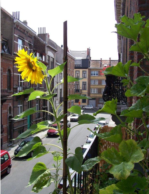 Sve en pamplona huertos urbanos - Huerto urbano balcon ...