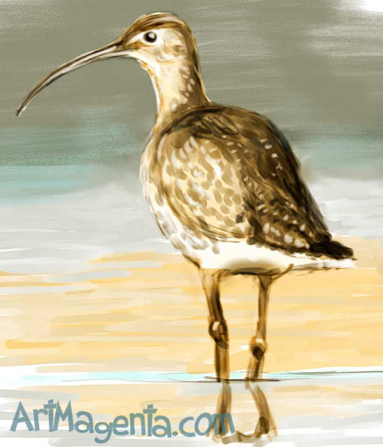 Curlew sketch painting. Bird art drawing by illustrator Artmagenta
