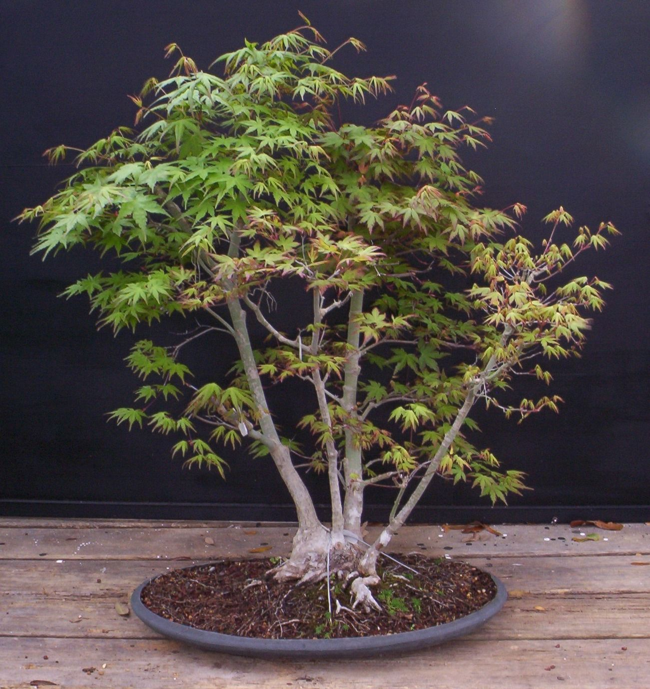 Bonsai Beginnings QuotBonsai Seedquot Collecting