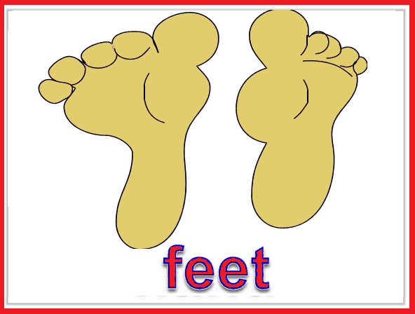 Kindergarten Worksheets: Parts of body Flashcards - Feet