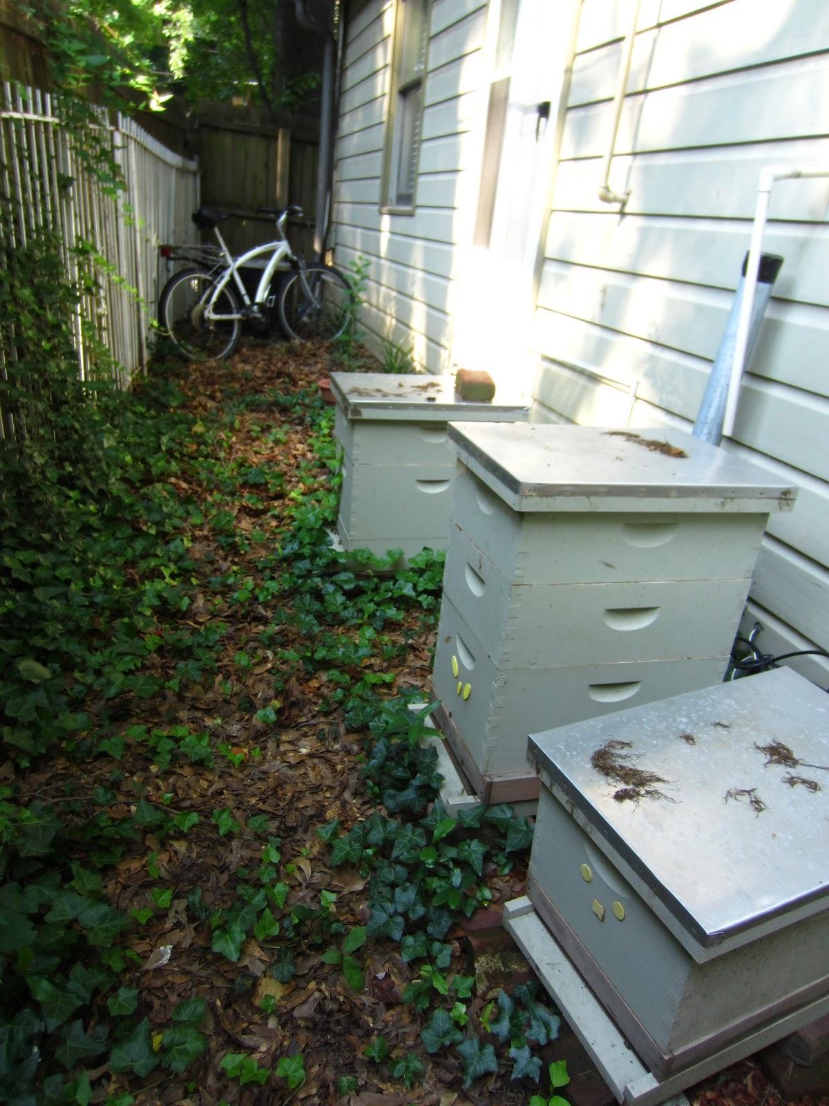 Linda39s Bees June 2013