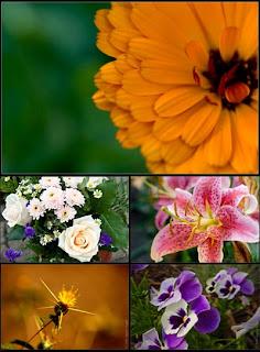 Цветы обои для рабочего стола