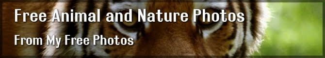 Free Animal and Nature Photos