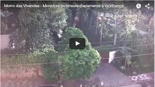 Cachorrada inferniza a vida dos moradores do Morro das Vivendas