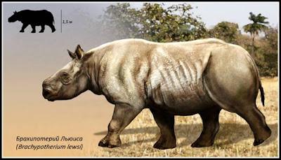 familia Rhinocerotidae genero fosil Brachypotherium