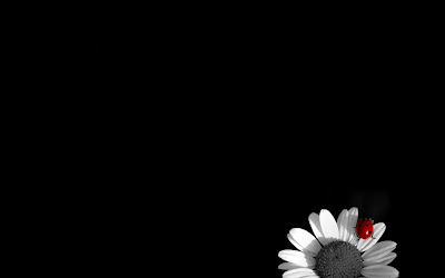 Black White flowers HQ PC Bug Wallpapers