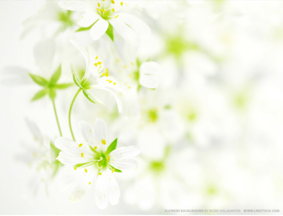 background pictures for desktop. flower desktop wallpaper.
