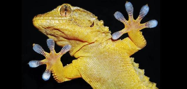 Satélite Ruso lleno de lagartos en celo se encuentra perdido en el Espacio