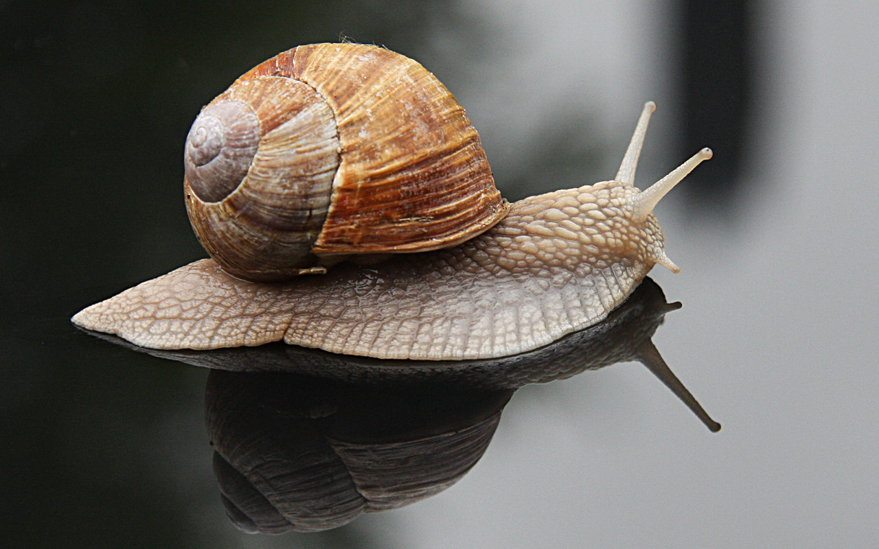 Animal World: How does a snail grow its shell?