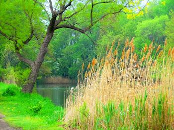 Lake Erie Metro Park