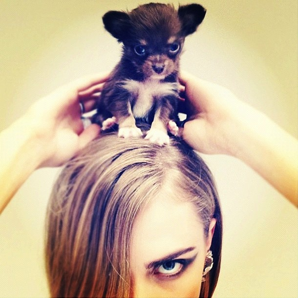Cara delevingne and baby animals by nick knight for instagram the