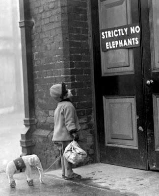 Elefántoknak belépni tilos??