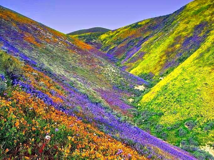 Valley of Flower, Uttarakhand
