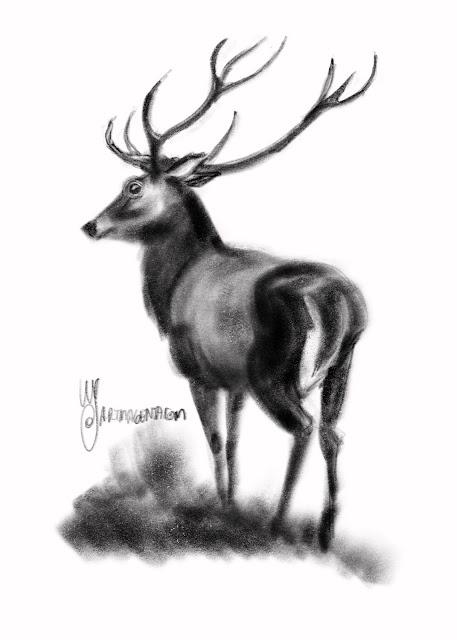 Deer sketch by Artmagenta