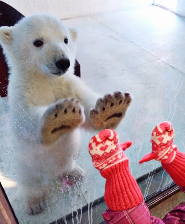 Funny animals of the week - 21 March 2014 (40 pics), funny animal pictures, baby polar bear in zoo