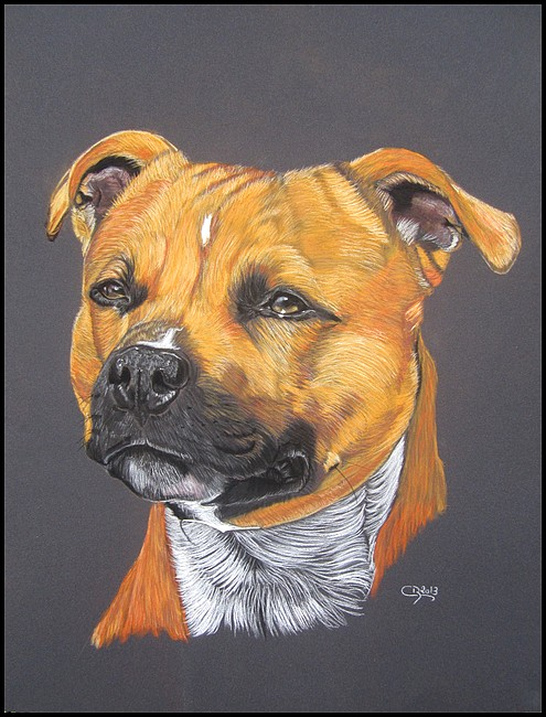 Portrait de Staffy