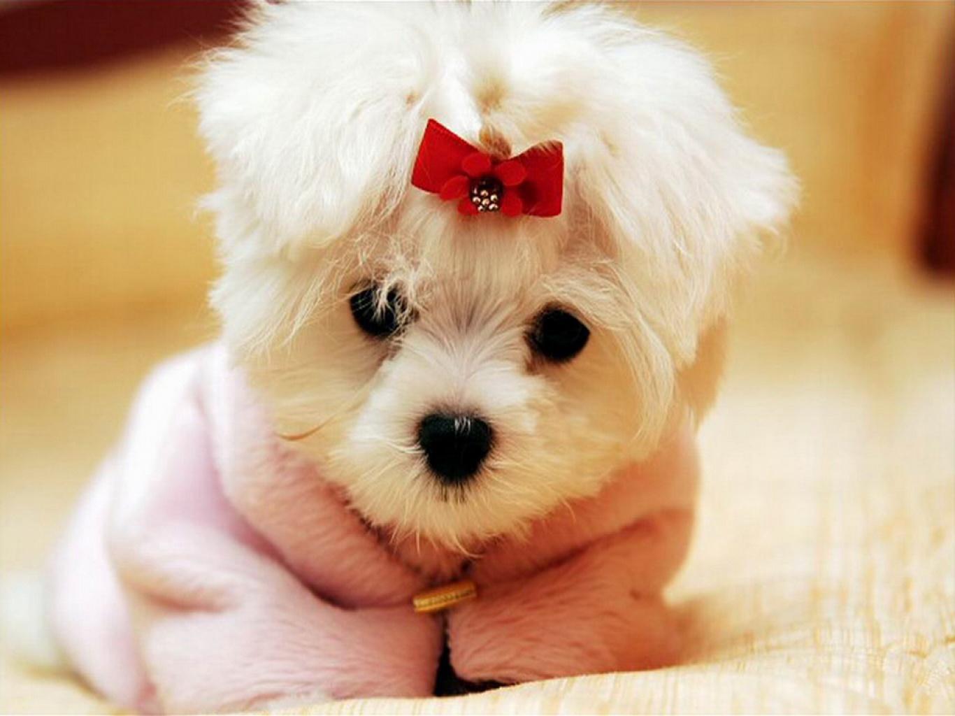 Imagenes super tiernas de perros y gatos: Imagenes Tiernas | Fotos ...