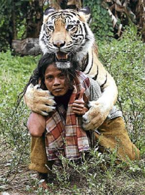 Berkawan dengan harimau