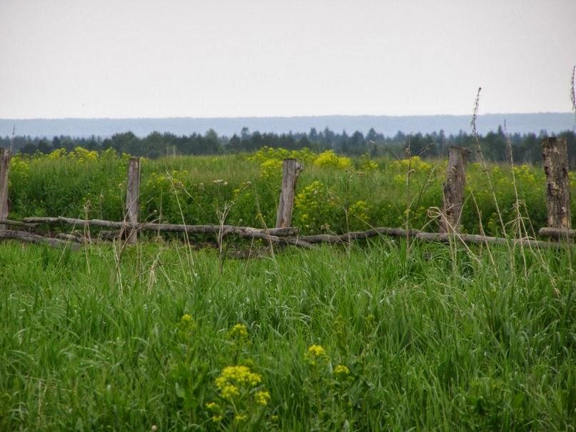 zabrochennoe pole