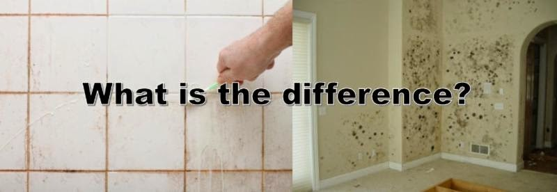 Professional restoration services of tampa bay inc for Musty odor definition