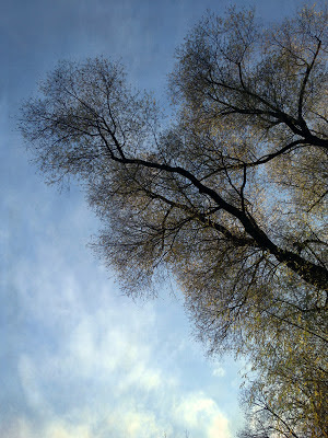 trees and sky with textures