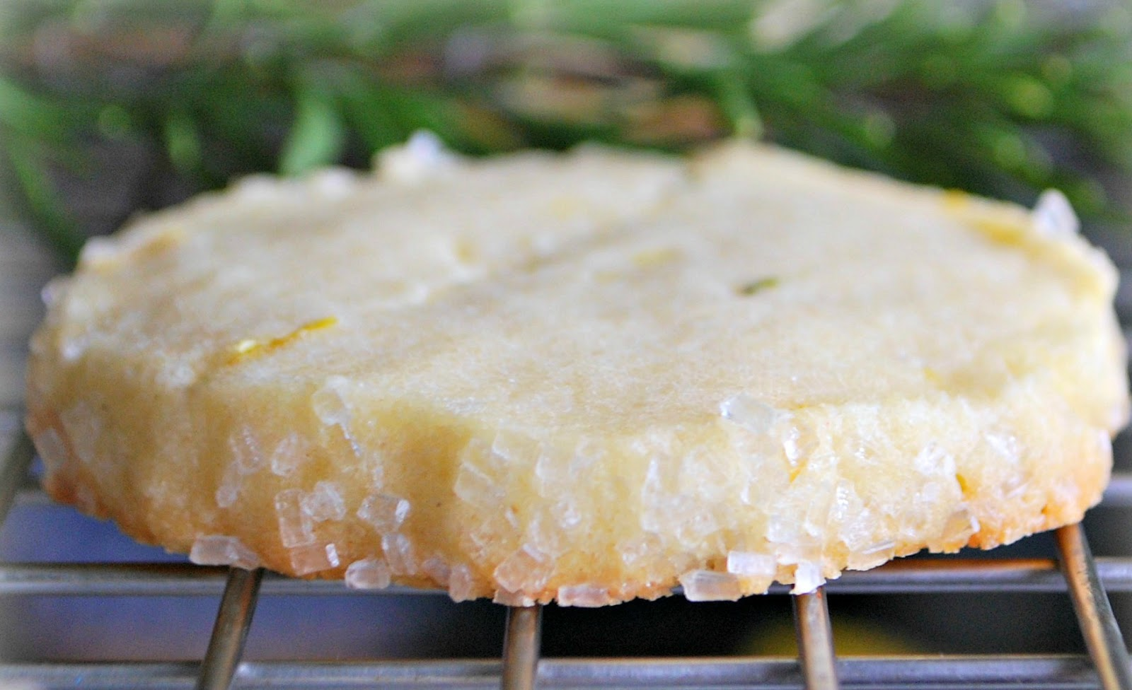 Lemon Shortbread With Fresh Rosemary Recipes — Dishmaps