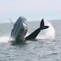 Baleia derruba barco de pesca no México e turista em férias captura sequência de imagens