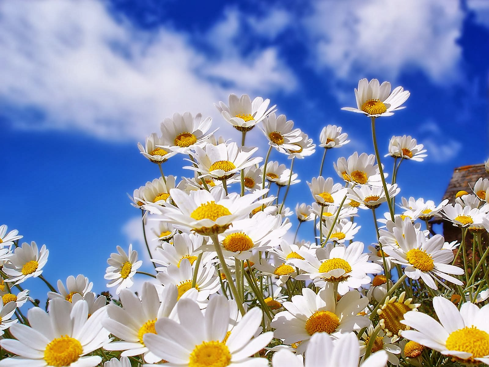 Spring Desktop HD Wallpapers