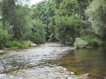 La rivière Le vert Gapeau