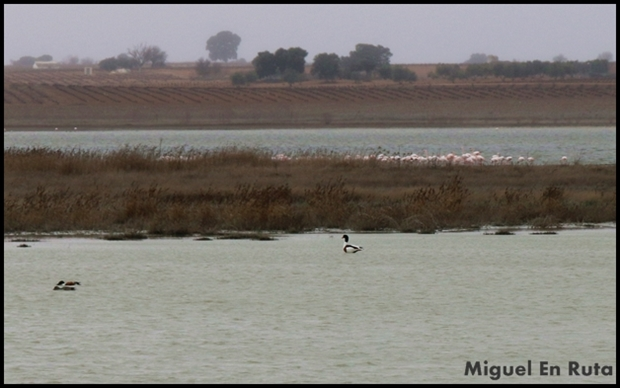 Laguna-de-Manjavacas_1