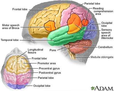 Brain Functions Diagram6