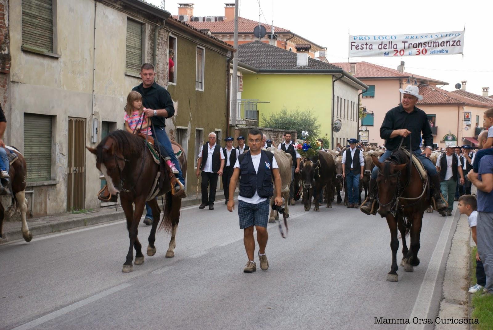 arrivo delle mucche