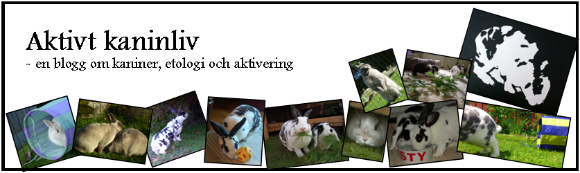 Aktivt kaninliv