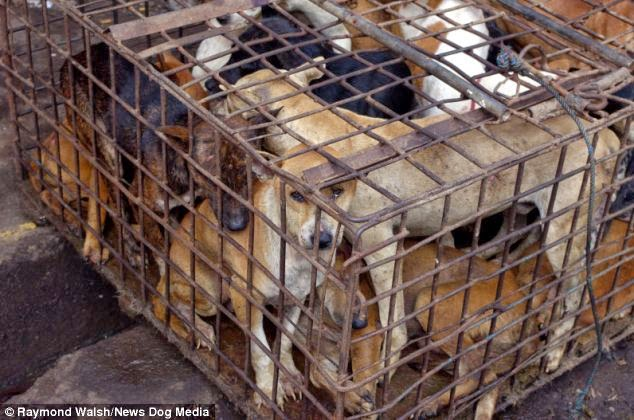 Dogs, Rats And Monkeys Flame-roasted WHOLE At Indonesian Market