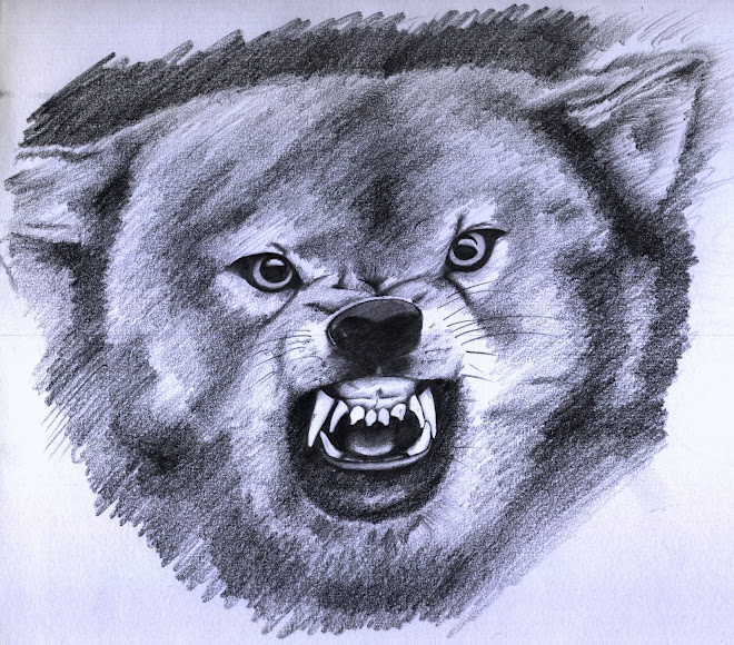 Wolf, pencil