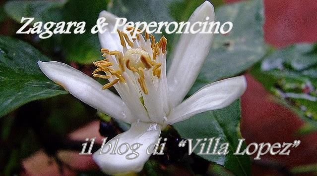 """Zagara e Peperoncino            Il Blog di """"Villa Lopez"""""""
