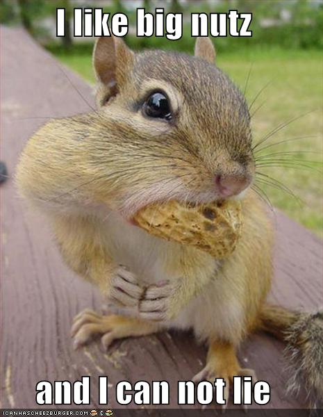 Weird Funny Photos: Squirrels With Mouths Full of Nuts