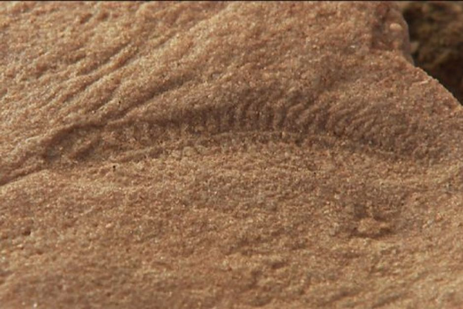 South Australia's outback holds Earth's oldest animal fossils