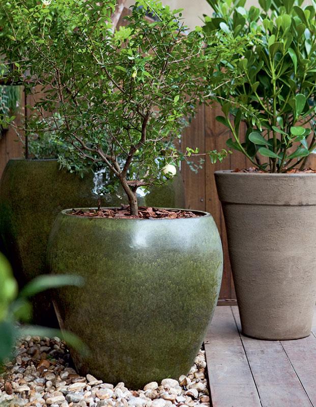 plantas jardins vasos : plantas jardins vasos: importante é manter uma proporção agradável entre vaso e planta