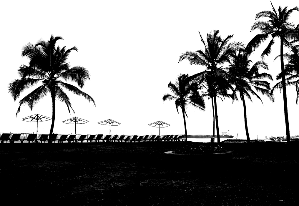 Stock Pictures: Coconut Trees Silhouettes