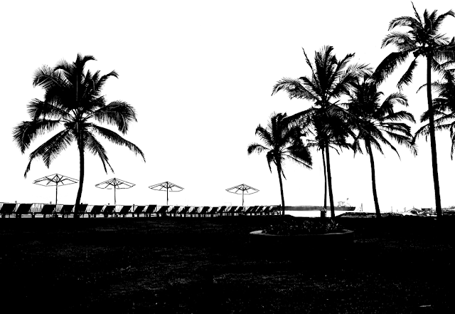 silhouette of palm trees at a beach