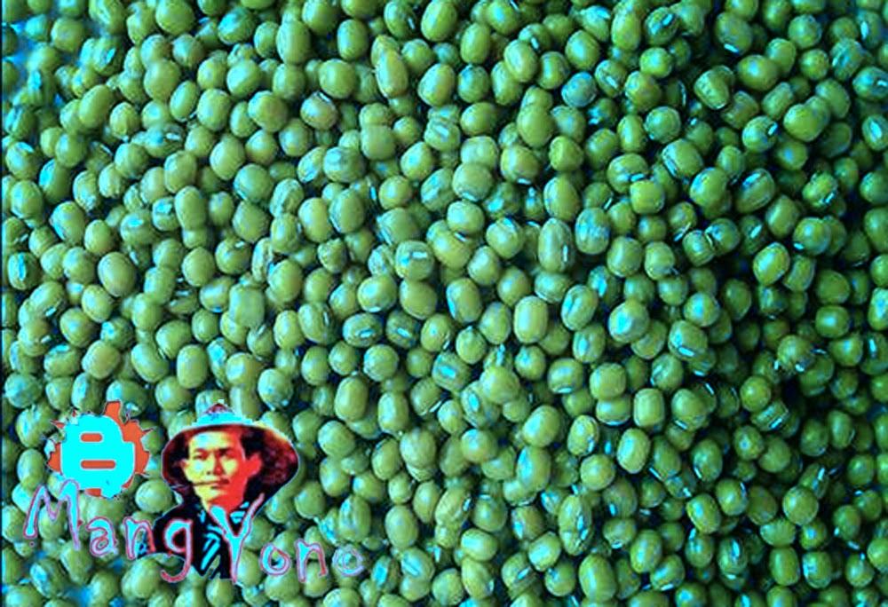 Polong kacang hijau setelah dipisahkan dari kulit