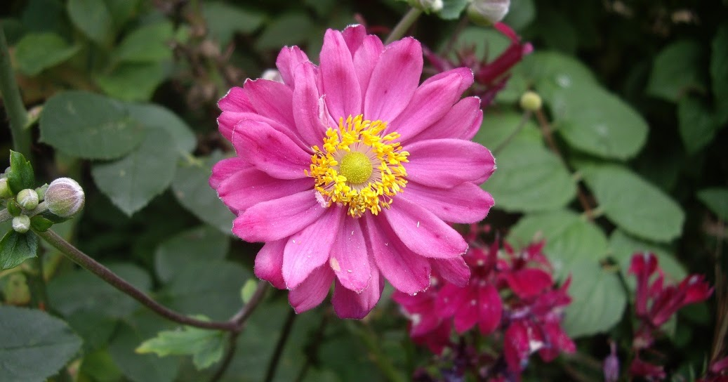 Derri re les murs de mon jardin la vie en rose - Derriere les murs de mon jardin ...