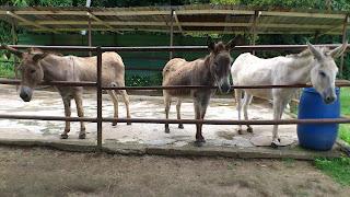 Boleh tunggang poney dengan bayaran RM6