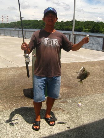 Scat or Kim Kor 金鼓, 金錢魚 Caught by Ah Huat At Woodland Jetty