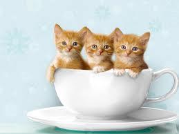 Pausa para um cafezinho. Ops!