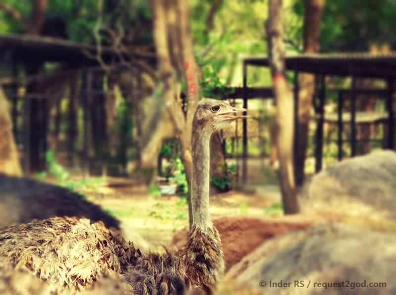 Ostritch beak, eyes and head