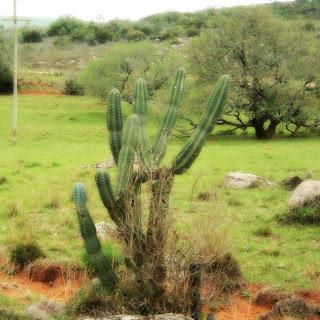 Vegetação no Cerro do Tigre, Alegrete