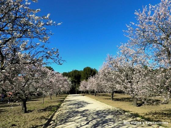 Floración de los almendros. Parque Quinta de los Molinos. Madrid